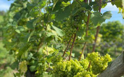 Cooperative Wine 2021